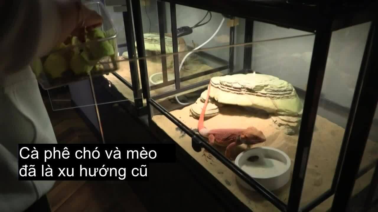 Nơi thực khách ăn uống cùng rắn và heo