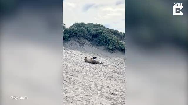 Khách thích thú ngắm sư tử biển chơi đùa