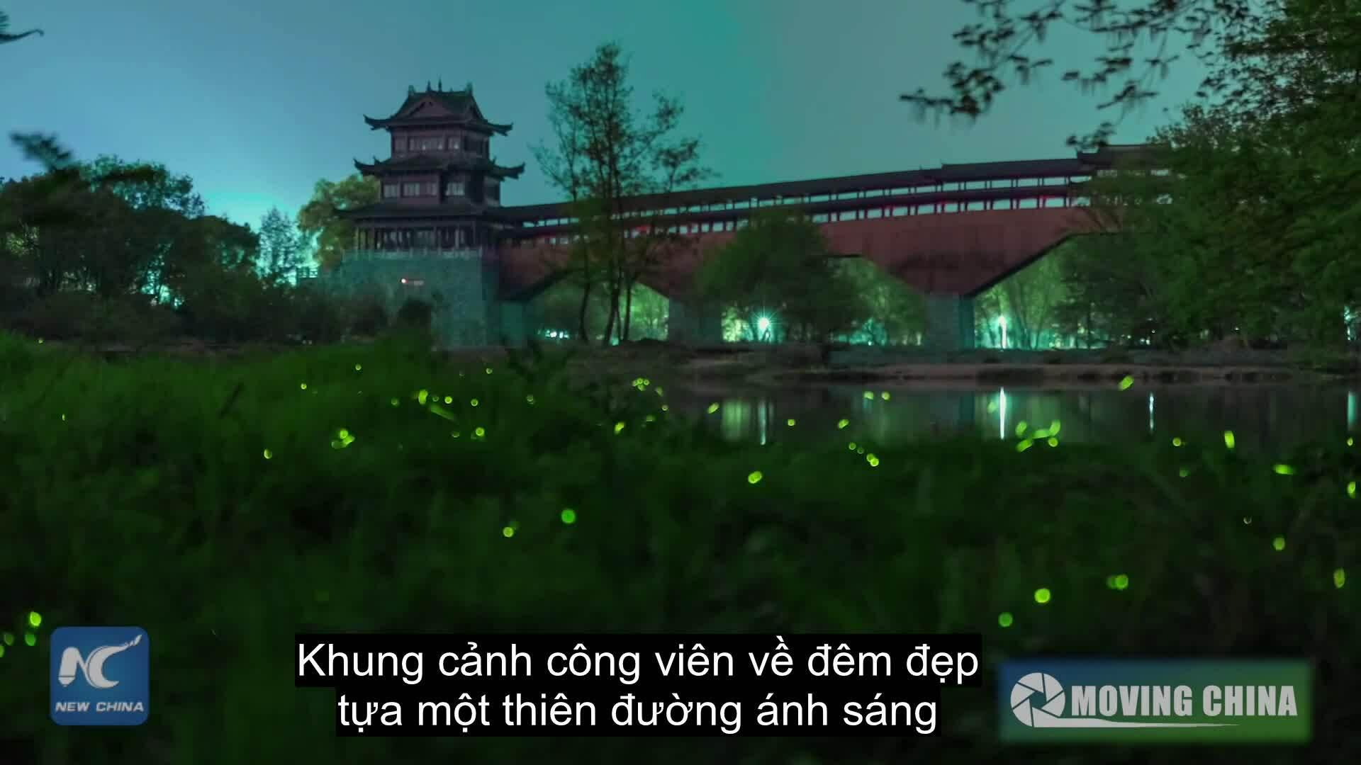 Thiên đường đom đóm đẹp như cổ tích ở Trung Quốc