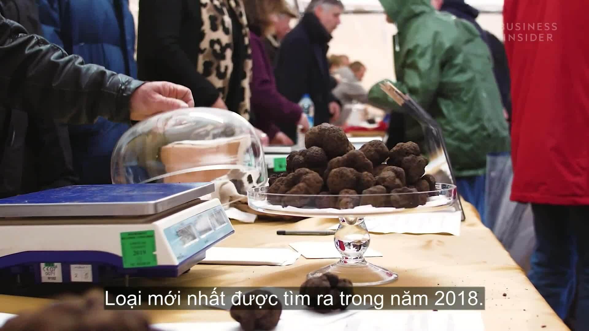 Vì sao nấm truffle có giá hàng nghìn USD?