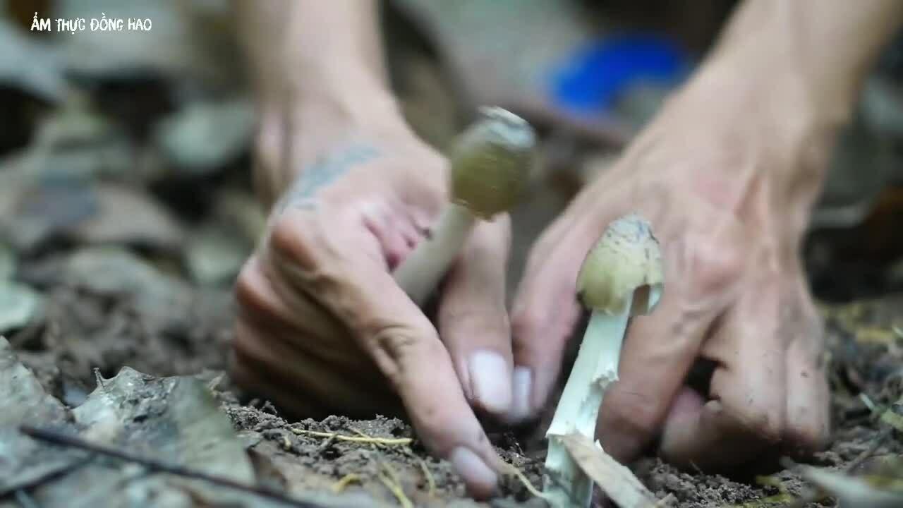 Đặc sản nấm mối trong rừng cao su Bình Phước