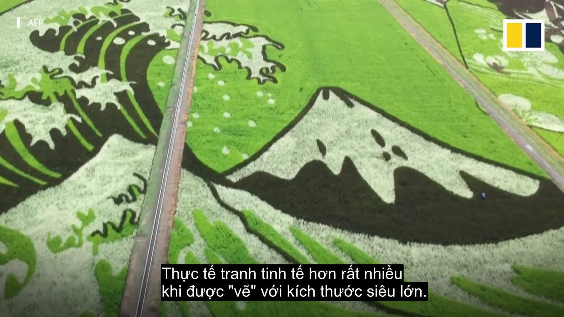 Chiêm ngưỡng kiệt tác vẽ trên đồng lúa Nhật Bản