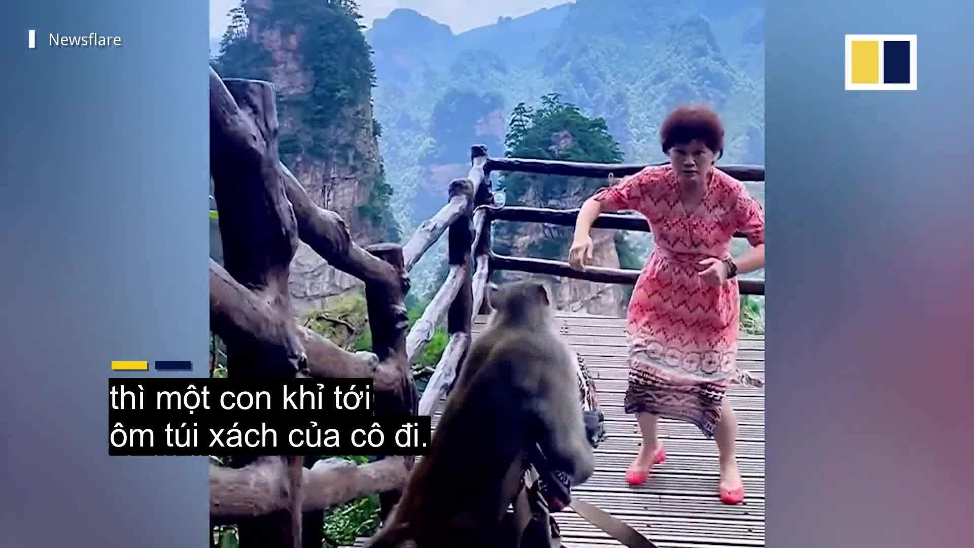 Bị khỉ trộm túi xách vì mải nhảy múa
