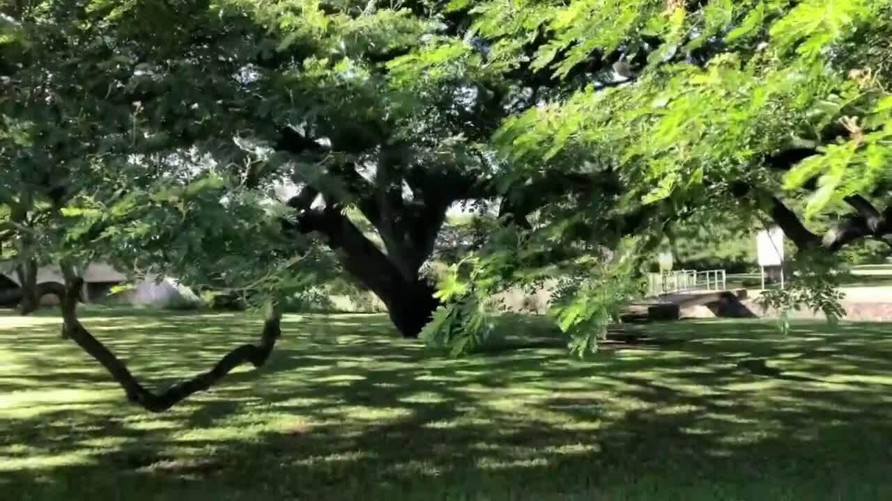 Hitachi - cái cây được tập đoàn điện tử Nhật Bản chọn làm biểu tượng