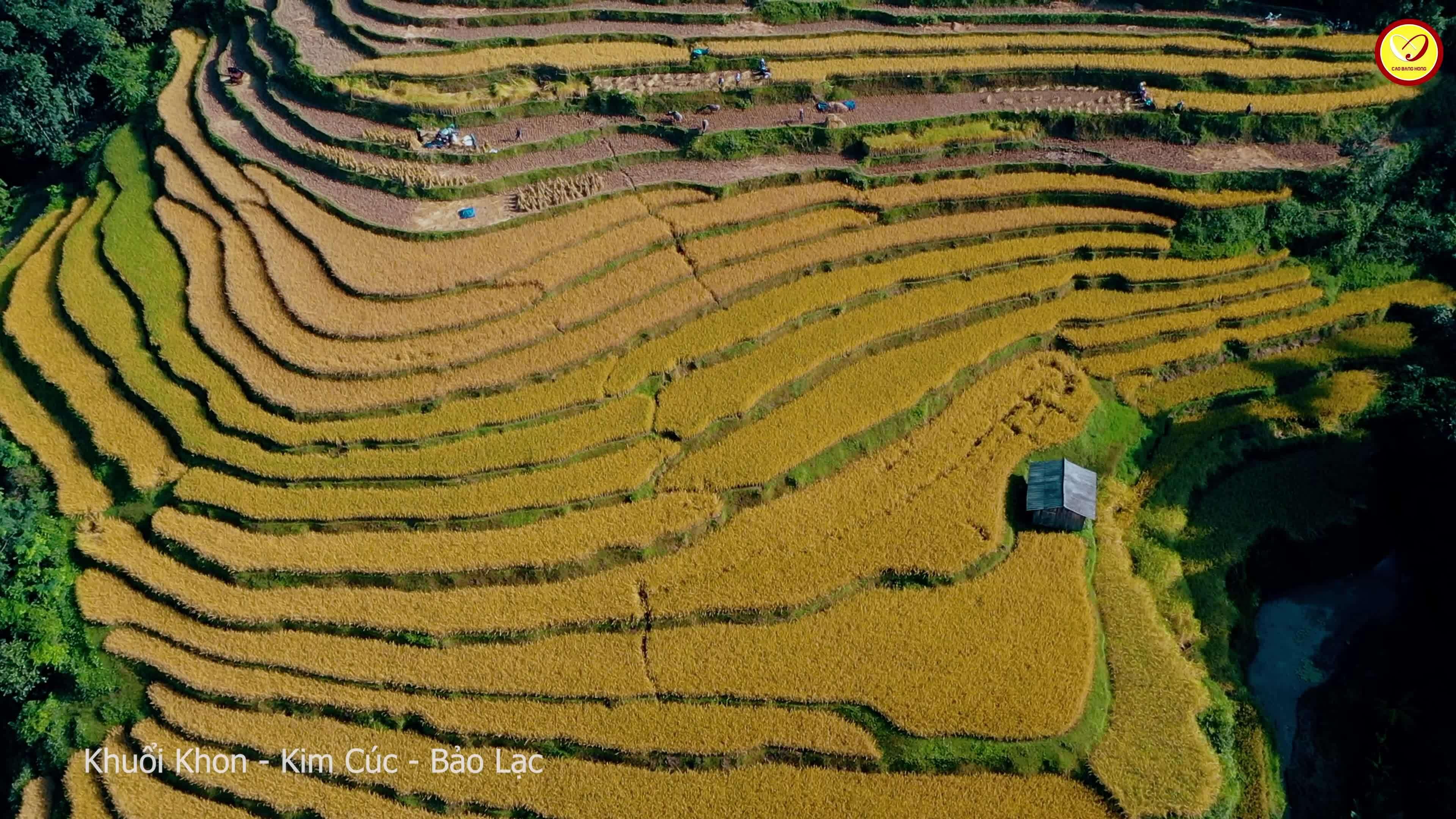Mùa vàng Cao Bằng đẹp như tranh