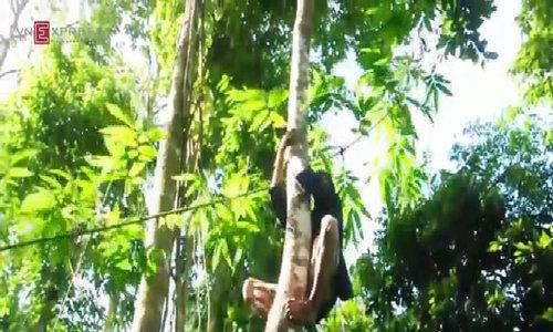 Vietnam's modern Tarzan