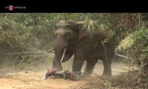 Wild elephant destroys motorbike