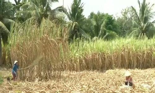 Severe drought threatens Vietnam's economy