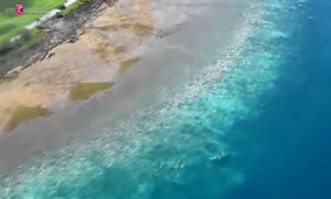 Australia scientists alarmed at new Great Barrier Reef coral bleaching