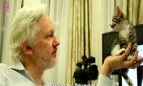 Assange meets feline friend at Ecuador embassy