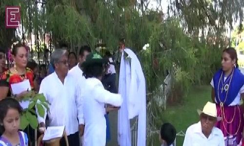 Environmentalist marries tree