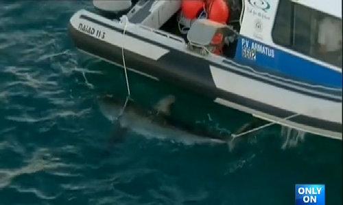 Shark killed after biting off surfer's leg