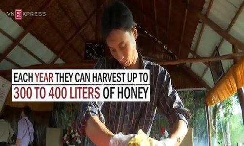 Wild honey harvesting in U-Minh Forest