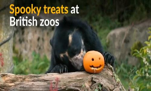 Halloween treats delight Britain's zoo animals