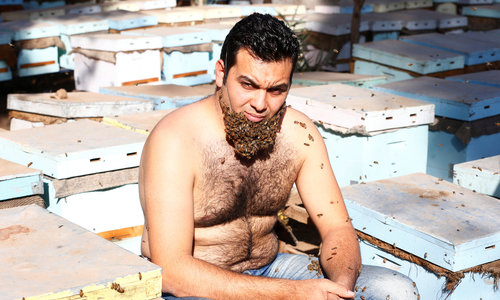 Egyptian man grows beard made out of bees