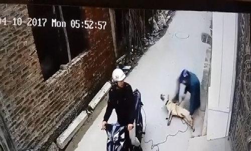 Stealing a dog in Vietnam