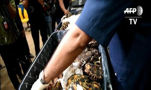 Malaysia seizes smuggled tortoises worth $300,000