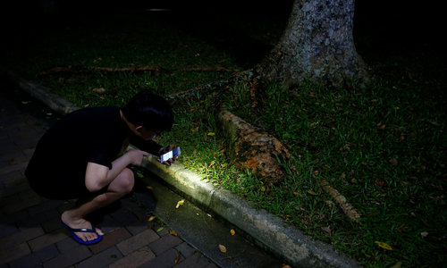 In Singapore, ant-hunting is a hobby