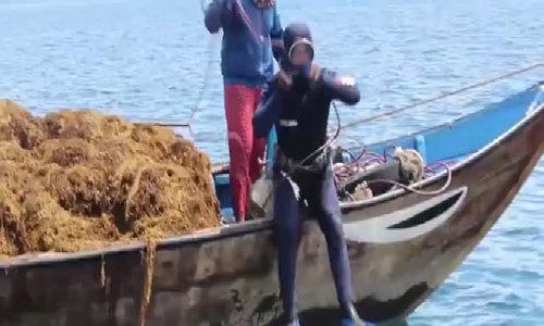 Money to dive for: Algae rush sends Vietnamese fishermen deep into the ocean