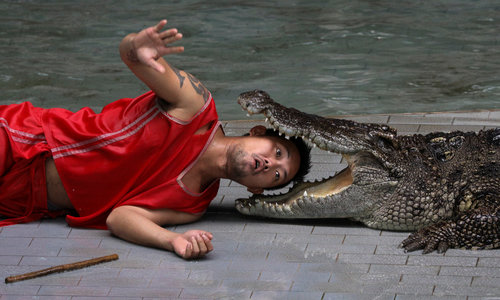 Locals and tourists develop taste for crocodile meat in Thailand