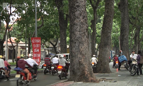What's your take on Saigon sacrificing over 250 trees for new bridge?