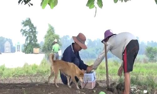 Rat-hunting in Mekong Delta's flood season