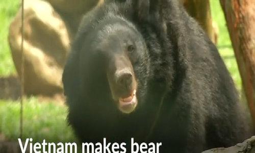 Vietnam makes bear bile farming illegal