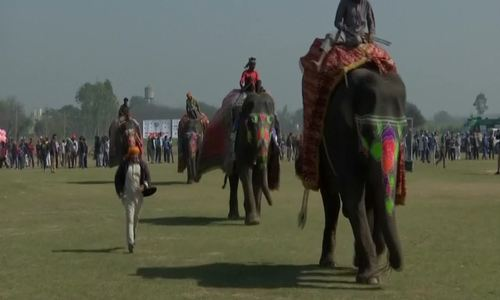 Elephant race and flying man bring down the curtain on India's 'Rural Olympics'