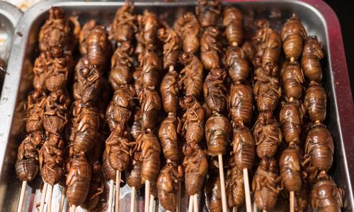 (Another) bizarre food in Vietnam: Behind the crunchy sound of cicadas