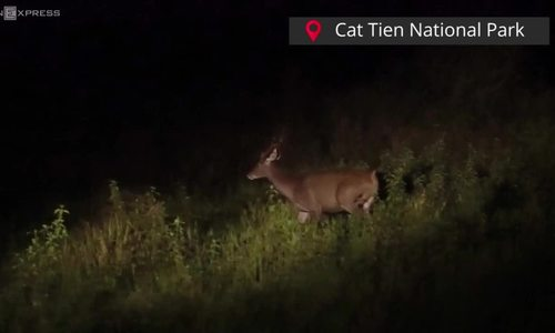 Take a wild night out in Vietnam's Cat Tien National Park