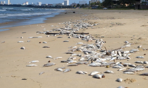 2 tons of dead fish washed ashore on Da Nang beach