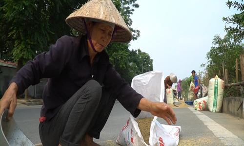 Rice drying a seasonal hazard on Thang Long Boulevard