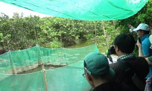 Fish farming at Son Islet