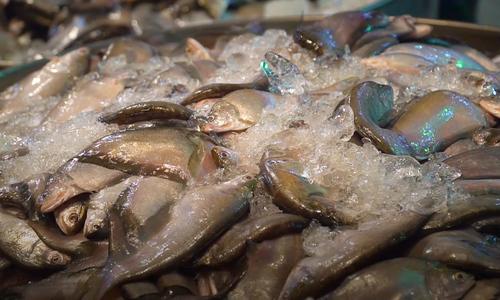 Sleepless in Saigion so seafood remains fresh