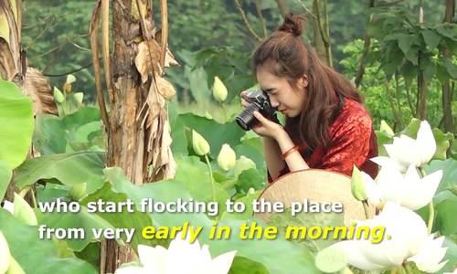Cameras, models flock to Hanoi pond as white lotuses bloom