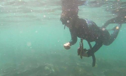Planet guardians: volunteers help restore Da Nang's coral reefs