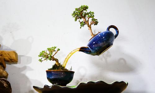 Artist transforms bonsai trees into floating islands