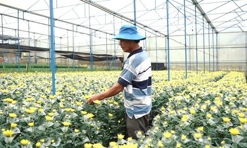 Da Lat flower farmers optimistic despite bleak economic outlook