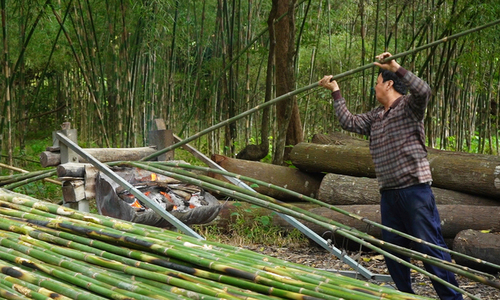 Grilling monastery bamboos, a traditional occupation in Mekong Delta
