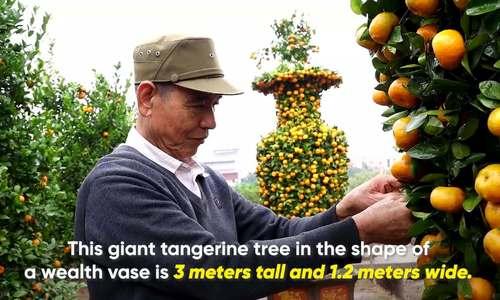 Farmer shapes giant tangerine like a wealth vase