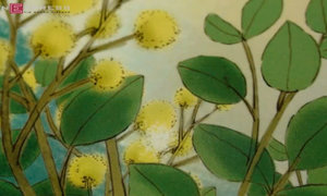 Chuyện kể cho bé: 'Sự tích hoa mimosa'