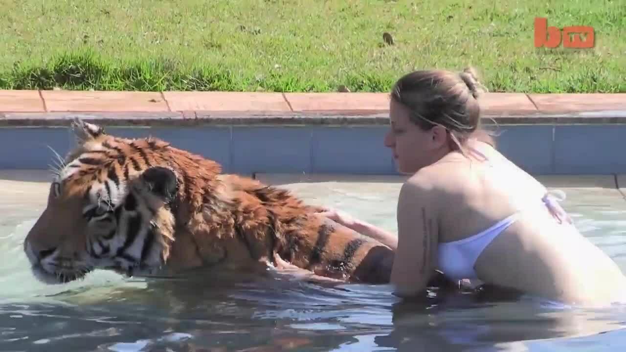 Gia đình bị xa lánh vì nuôi hổ như mèo cưng