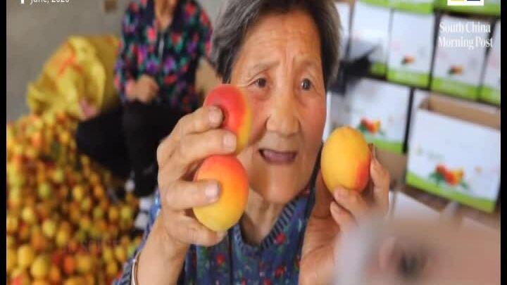 Cụ bà 80 tuổi livestream bán đào