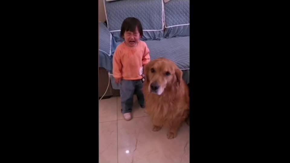 Em bé được chó bảo vệ khi bị mẹ mắng
