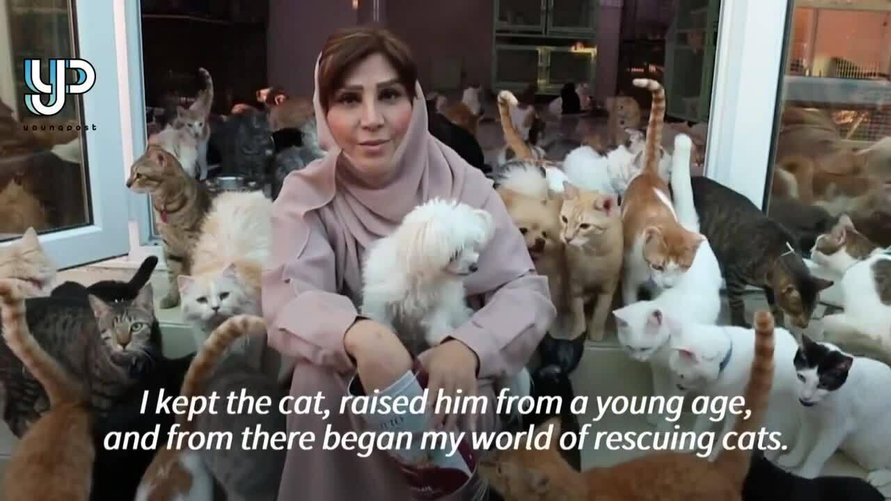 Người phụ nữ nuôi 500 con mèo, chó