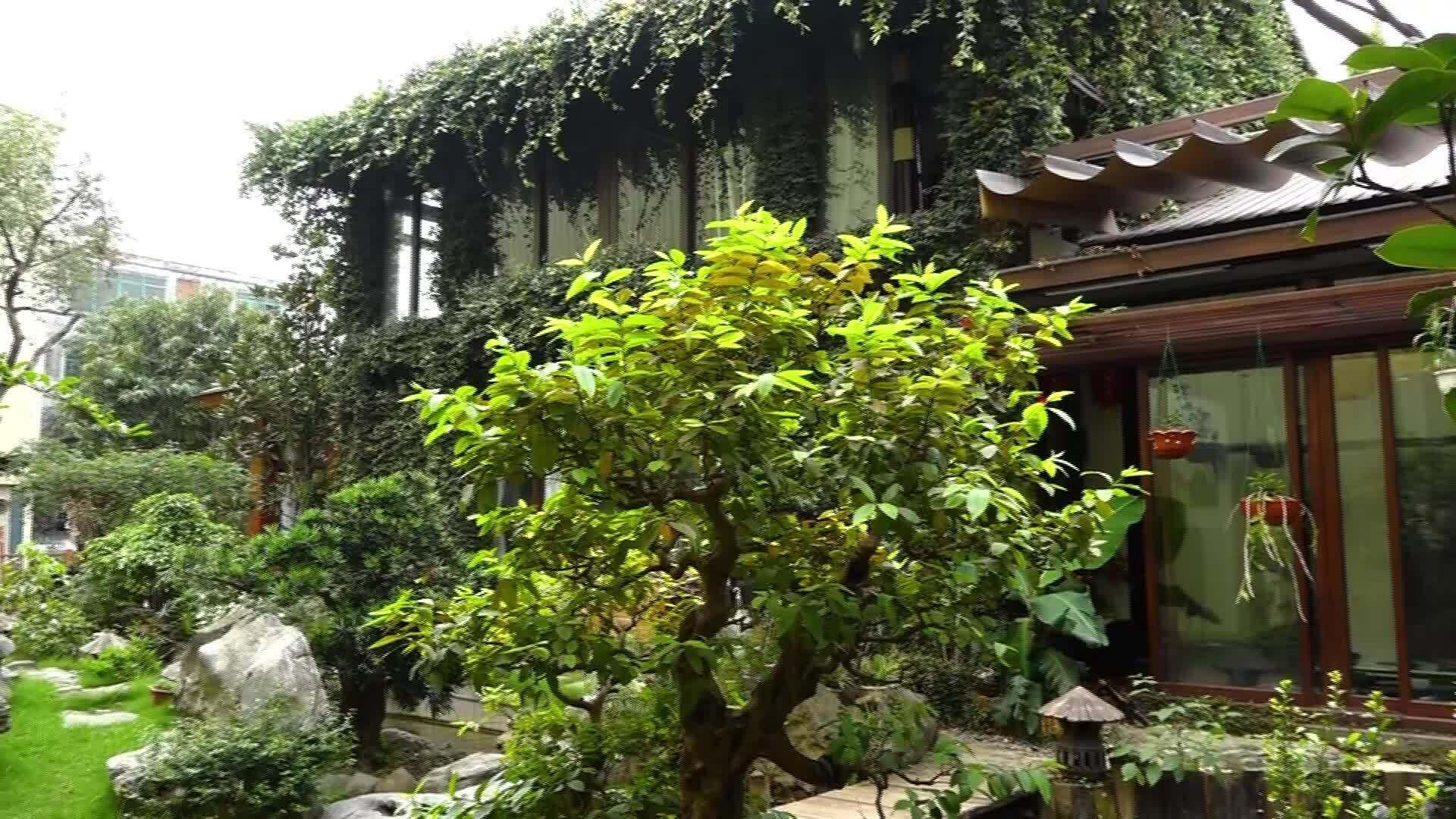 Tự thiết kế ngôi nhà ngập tràn cây xanh tặng vợ