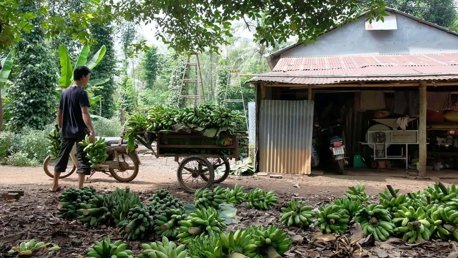Anh chồng xây nhà giữa đồi cho vợ chữa bệnh
