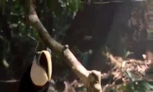 'Earth Song' - Michael Jackson