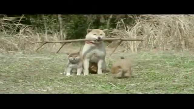 """Trailer """"A tale of Mari and three puppies"""