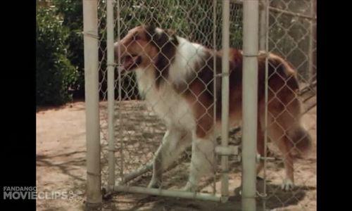 "Trích ""Lassie come home"""